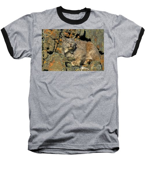 Baseball T-Shirt featuring the photograph Canadian Lynx On Lichen-covered Cliff Endangered Species by Dave Welling