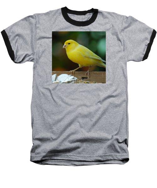 Baseball T-Shirt featuring the photograph Canary Domesticated by Ramona Whiteaker