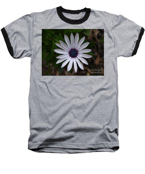 Cape Daisy Baseball T-Shirt by Richard Brookes
