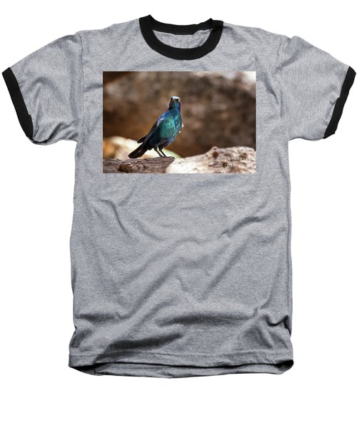 Cape Glossy Starling Baseball T-Shirt by Jane Rix