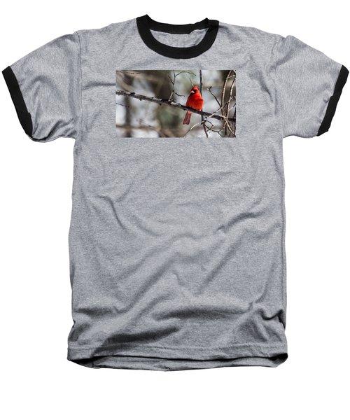 Cardinal Baseball T-Shirt by Dan Traun