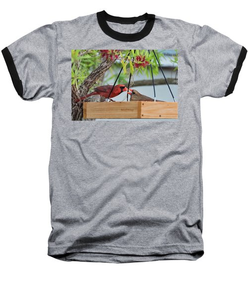 Cardinal Feeding  Baseball T-Shirt
