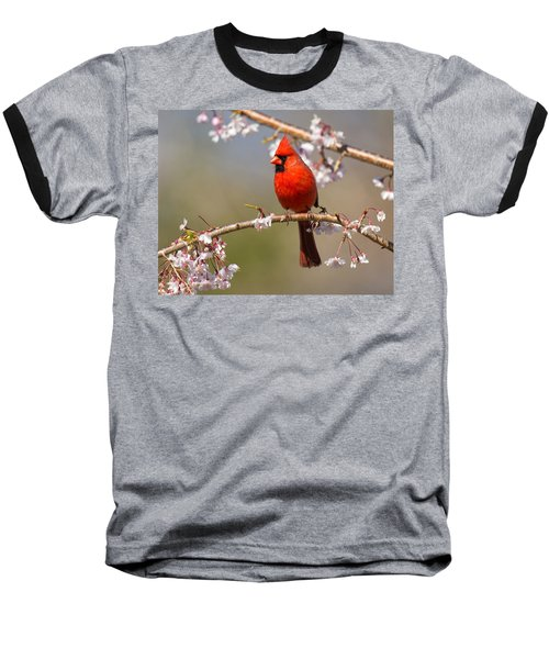 Baseball T-Shirt featuring the photograph Cardinal In Cherry by Angel Cher