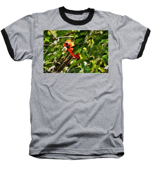 Cardinal In Tree Baseball T-Shirt