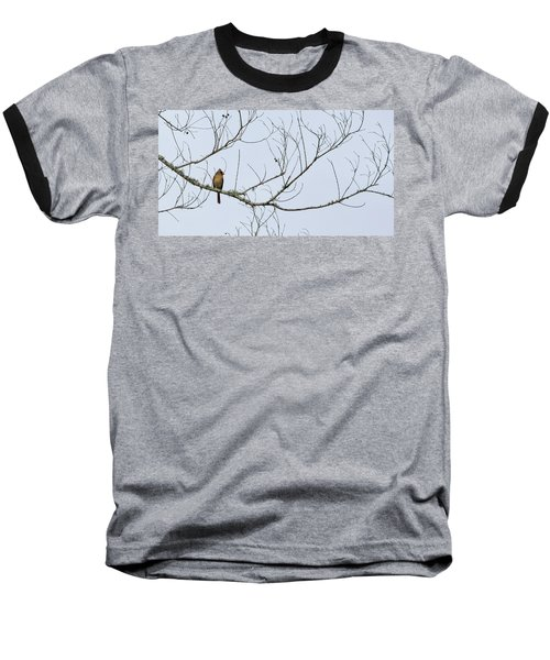 Cardinal In Tree Baseball T-Shirt by Richard Rizzo
