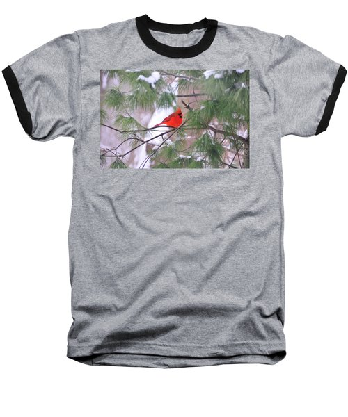Cardinal In Winter Baseball T-Shirt
