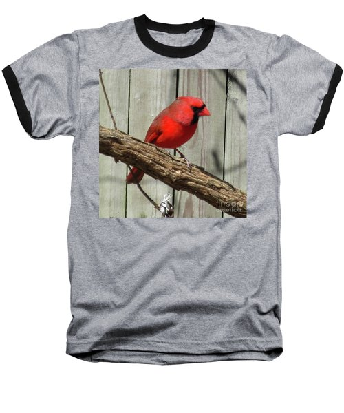 Cardinal Waiting For Spring Baseball T-Shirt
