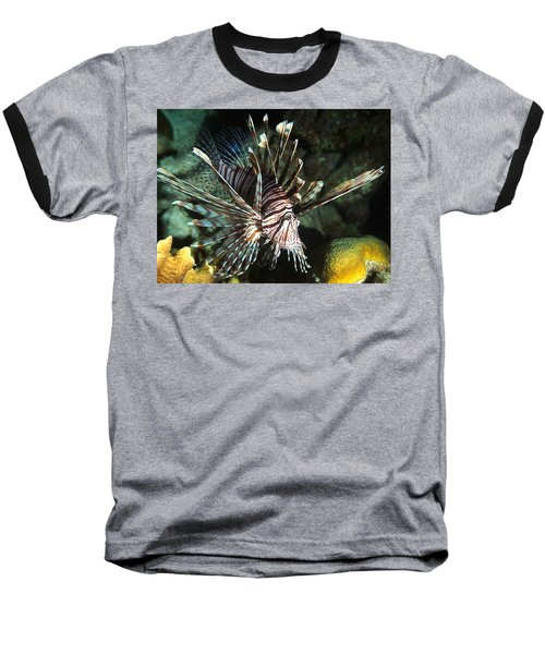 Caribbean Lion Fish Baseball T-Shirt