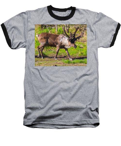 Caribou Antlers In Velvet Baseball T-Shirt by Allan Levin