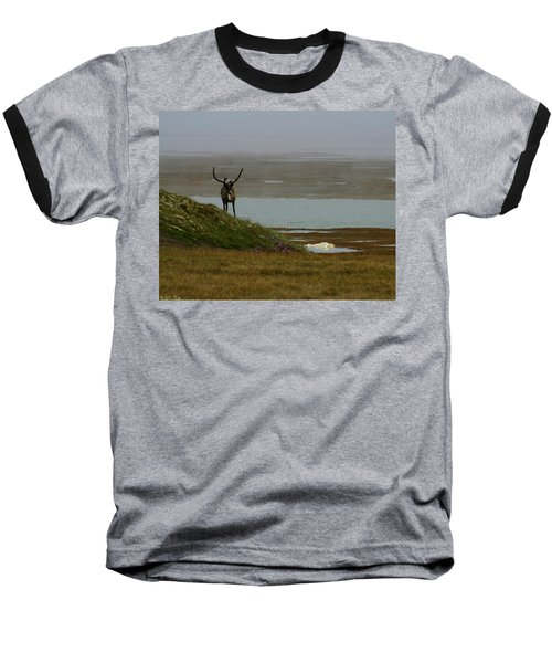 Caribou Fog Baseball T-Shirt by Anthony Jones