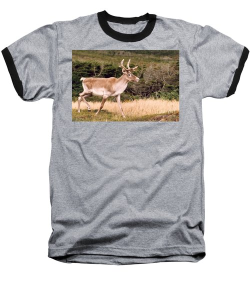 Baseball T-Shirt featuring the photograph Caribou by Mary Mikawoz