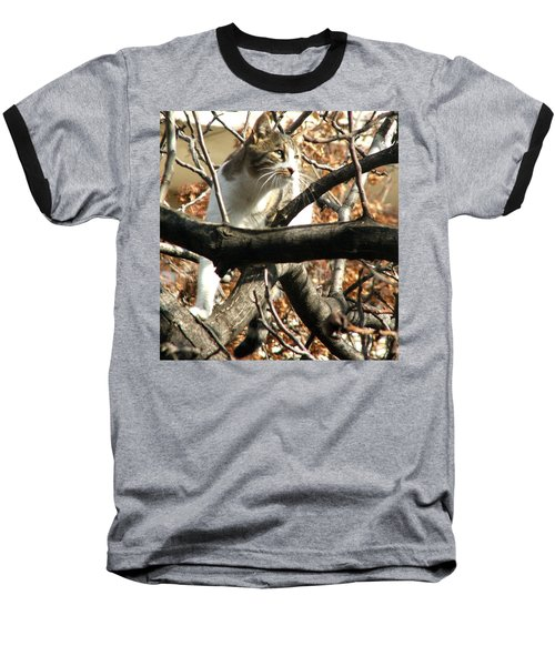 Cat Hunting Bird Baseball T-Shirt by Judi Saunders