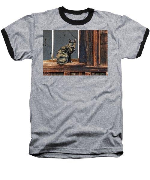 Cat In A Window Baseball T-Shirt by Scott Warner