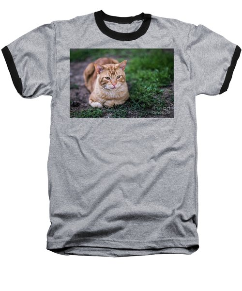 Baseball T-Shirt featuring the photograph Cat On Genoves Park Cadiz Spain by Pablo Avanzini