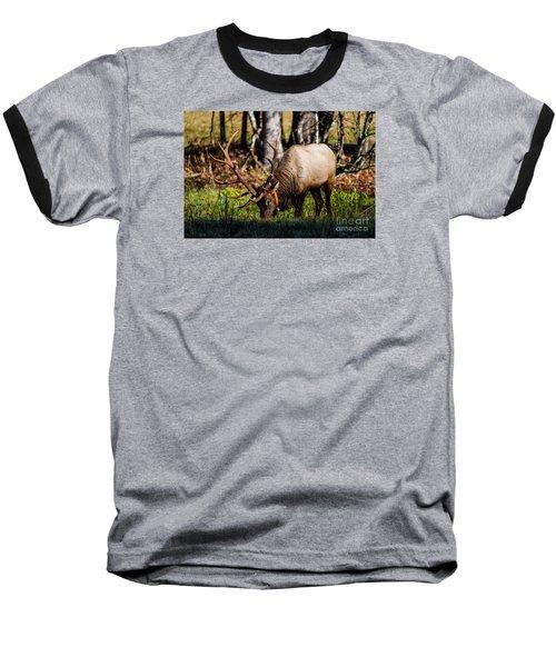 Cataloochee Elk Bull Baseball T-Shirt