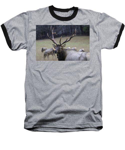 Cataloochee Elk Baseball T-Shirt
