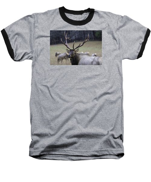Cataloochee Elk Baseball T-Shirt