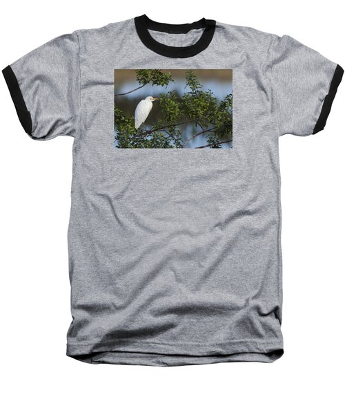 Cattle Egret In The Morning Light Baseball T-Shirt