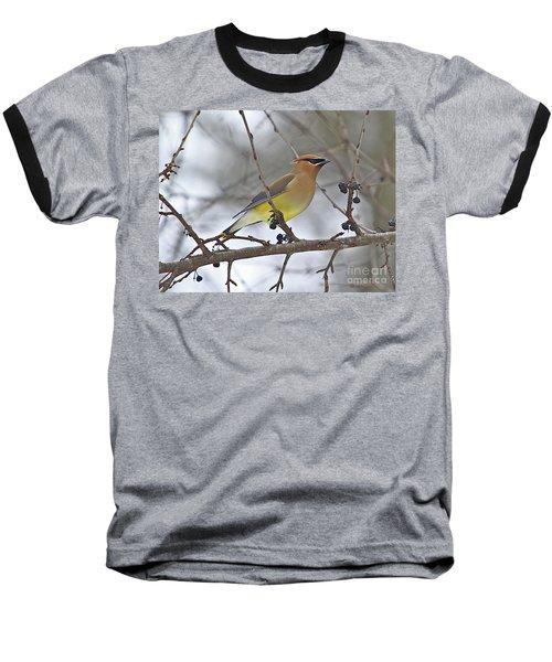 Cedar Wax Wing-2 Baseball T-Shirt by Robert Pearson