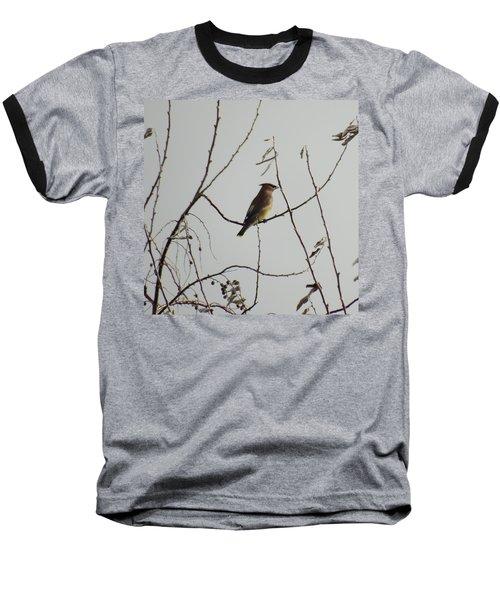 Cedar Wax Wing In Tree Baseball T-Shirt