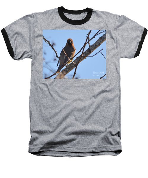Cedar Wax Wing On The Lookout Baseball T-Shirt by Barbara Dalton