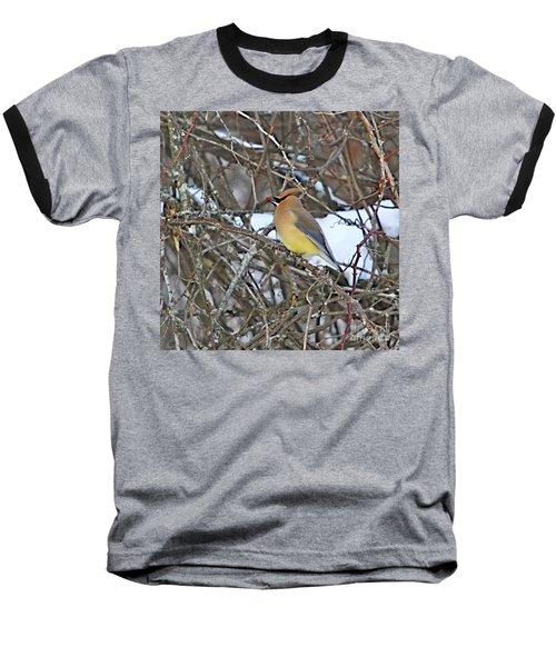 Cedar Wax Wing Baseball T-Shirt