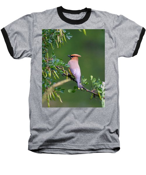 Cedar Waxwing 1 Baseball T-Shirt