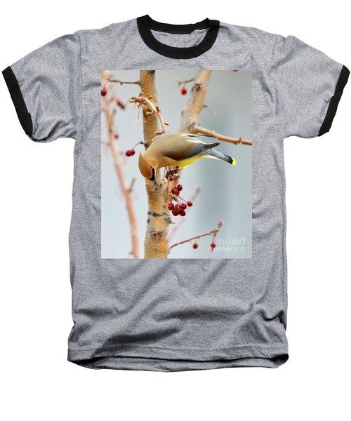 Cedar Waxwing 2 Baseball T-Shirt