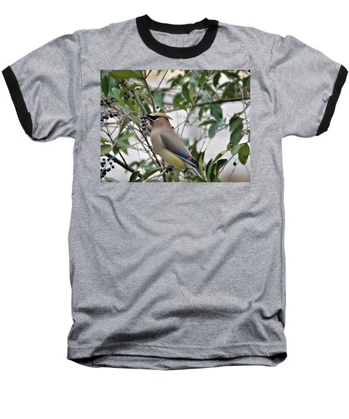 Cedar Waxwing 3 Baseball T-Shirt