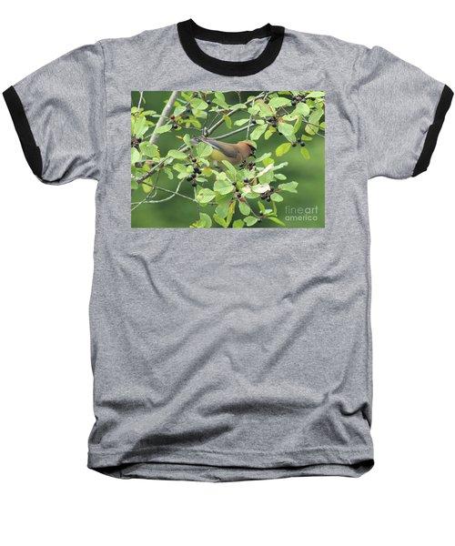 Cedar Waxwing Eating Berries Baseball T-Shirt