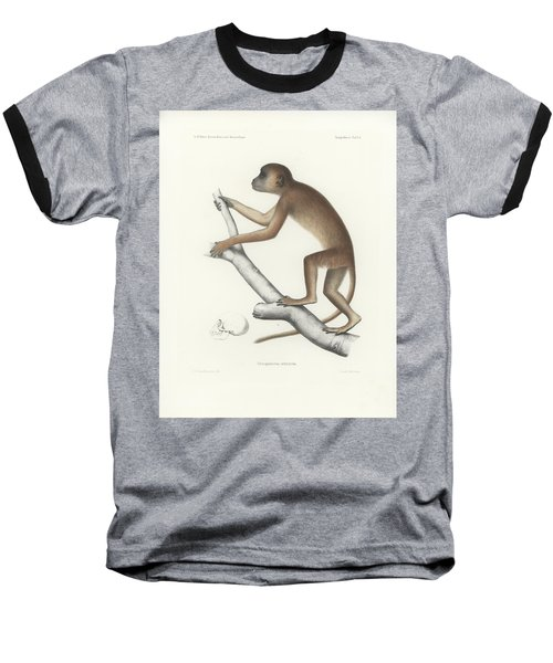 Central Yellow Baboon, Papio C. Cynocephalus Baseball T-Shirt