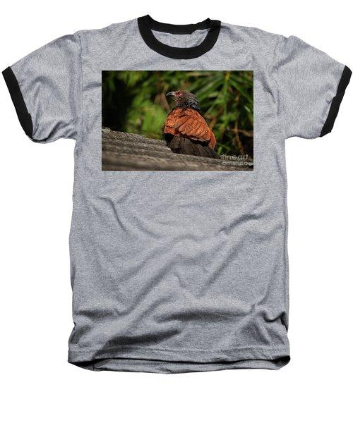 Centropus Sinensis Baseball T-Shirt