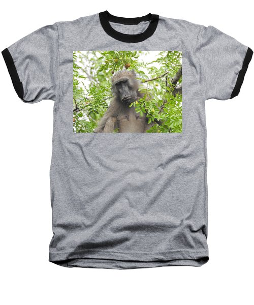 Chacma Baboon Baseball T-Shirt by Betty-Anne McDonald