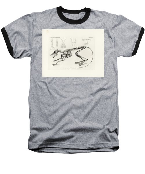 Checkered Elephant Shrew Skeleton Baseball T-Shirt
