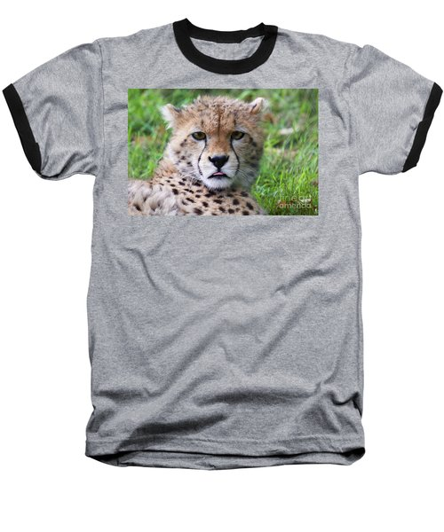 Baseball T-Shirt featuring the photograph Cheetah by MGL Meiklejohn Graphics Licensing