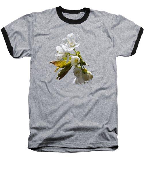 Cherry Blossoms Baseball T-Shirt by Christina Rollo