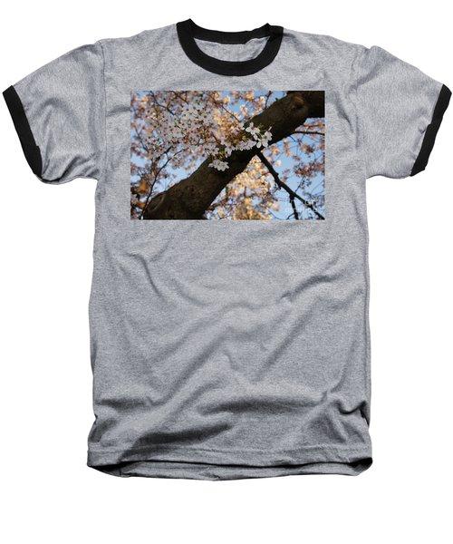 Cherry Blossoms Baseball T-Shirt by Megan Cohen