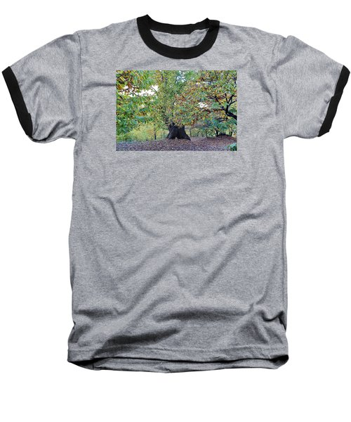 Chestnut Tree In Autumn Baseball T-Shirt by Goyo Ambrosio