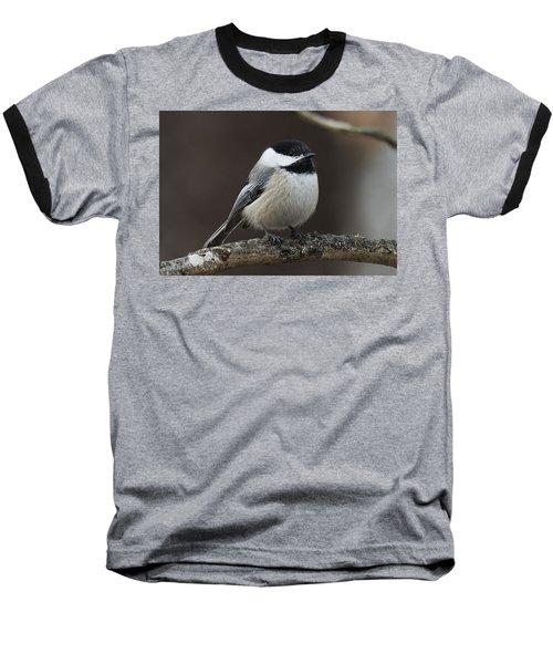 Chickadee Baseball T-Shirt by Diane Giurco