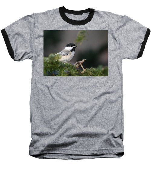 Baseball T-Shirt featuring the photograph Chickadee In Balsam Tree by Susan Capuano