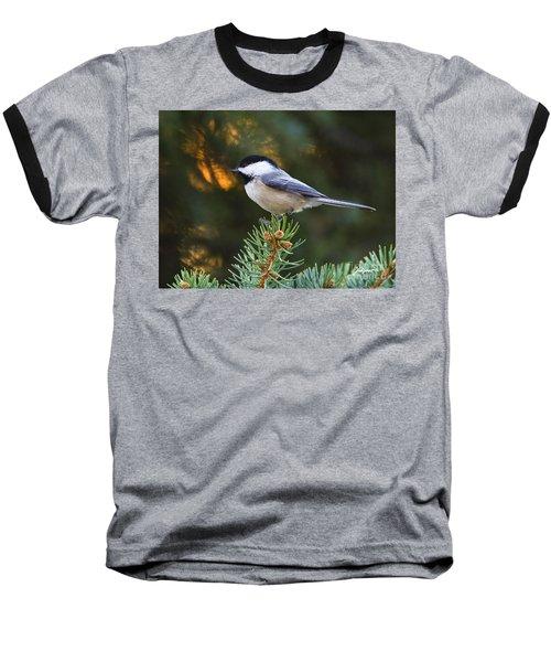 Chickadee In Spruce  Baseball T-Shirt
