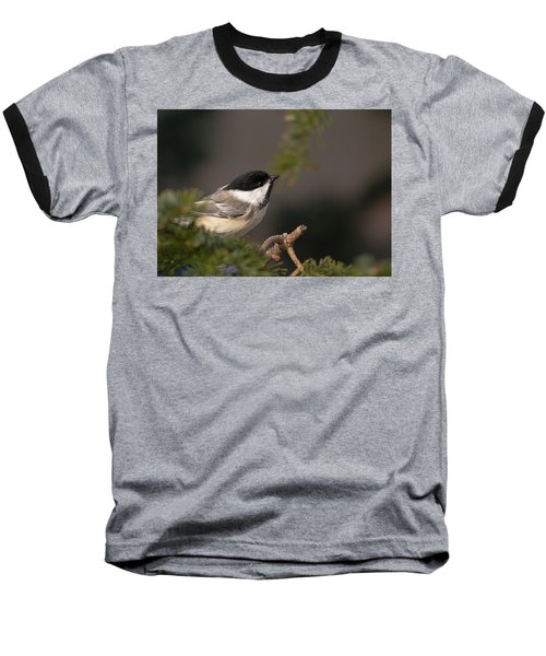 Baseball T-Shirt featuring the photograph Chickadee In The Shadows by Susan Capuano