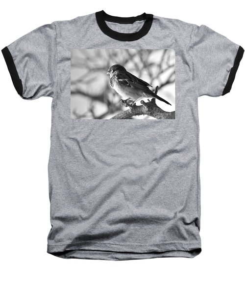 Chickadee Baseball T-Shirt by Sheila Ping
