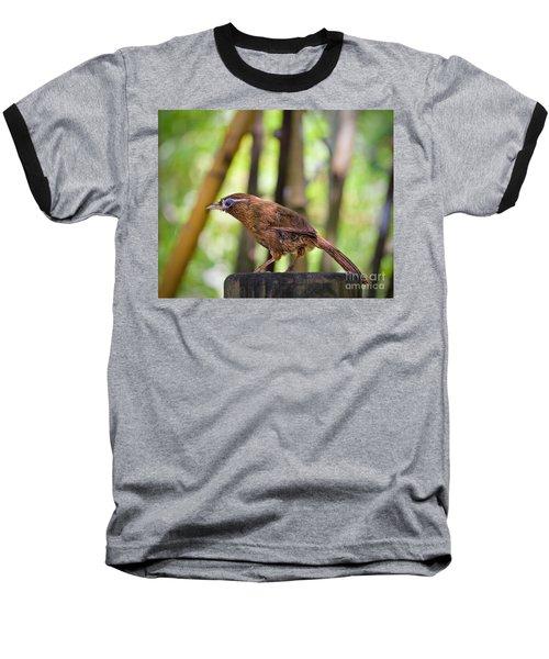 Chinese Hwamei  Edition 2 Baseball T-Shirt