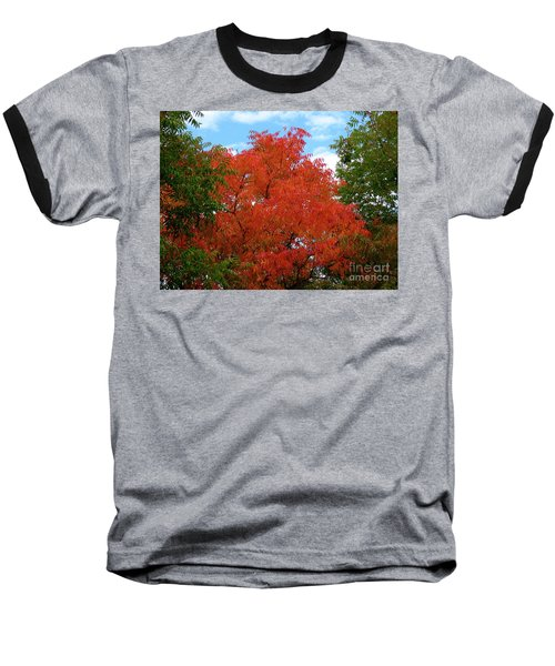 Chinese Pistache Fall Color Baseball T-Shirt