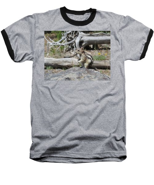 Chipmunk At Yellowstone Baseball T-Shirt