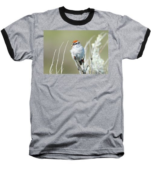 Baseball T-Shirt featuring the photograph Chipping Sparrow by Mike Dawson