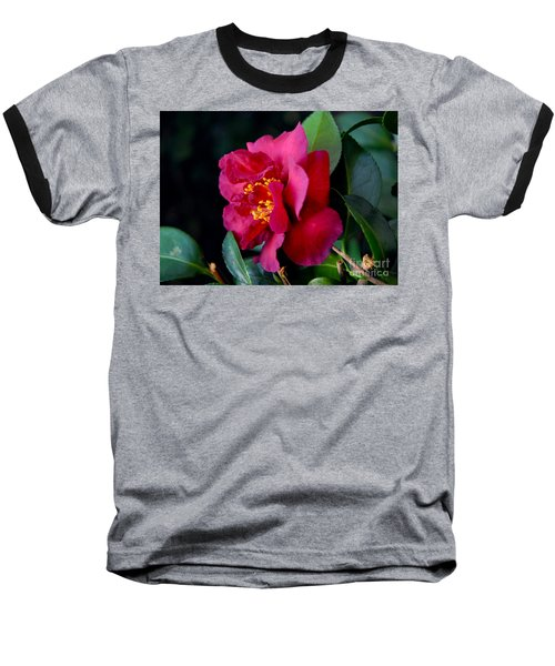 Christmas Camellia Baseball T-Shirt by Marie Hicks