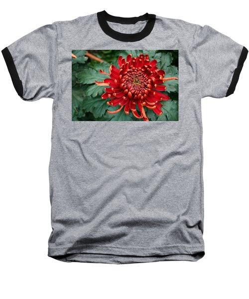 Christmas Chrysanthemum Baseball T-Shirt