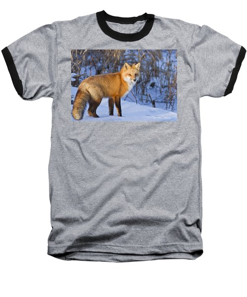 Christmas Fox Baseball T-Shirt
